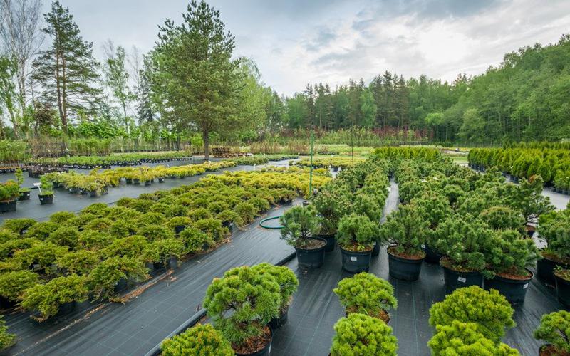 Питомник декоративных растений: бизнес идея