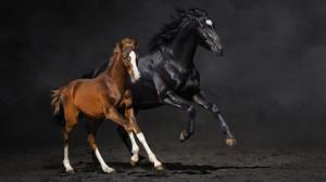 Бизнес план: как открыть ферму по разведению лошадей