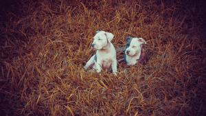 Питомник для собак: бизнес план