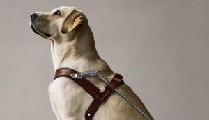 Разведение породистых собак: бизнес план