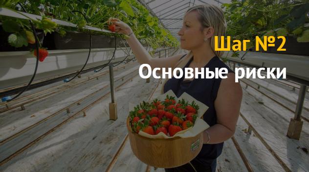 Бизнес план на выращивание клубники 37