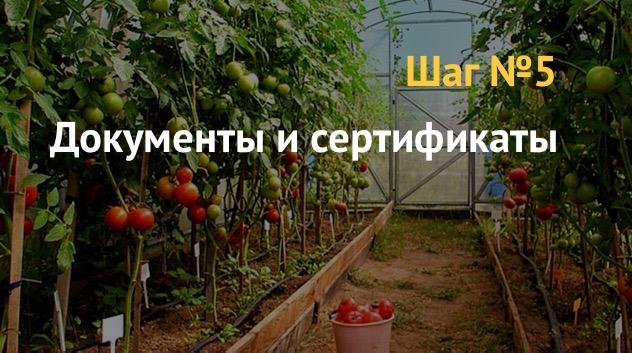Бизнес план: выращивание овощей в теплицах