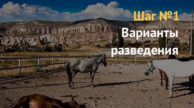 Варианты разведения лошадей